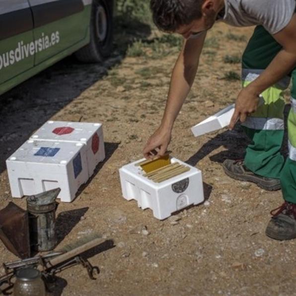Apicultor recogiendo los panales de miel