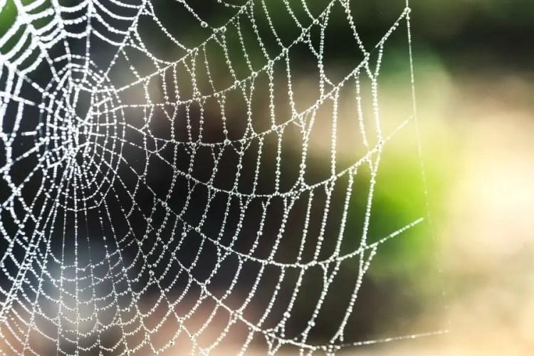 No te dejes entrampar por las redes al comenzar el día