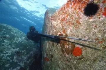 Un pescador de pesca submarina con su fusil