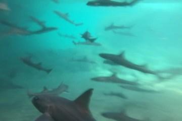 Nadando con tiburones en Gran Canaria