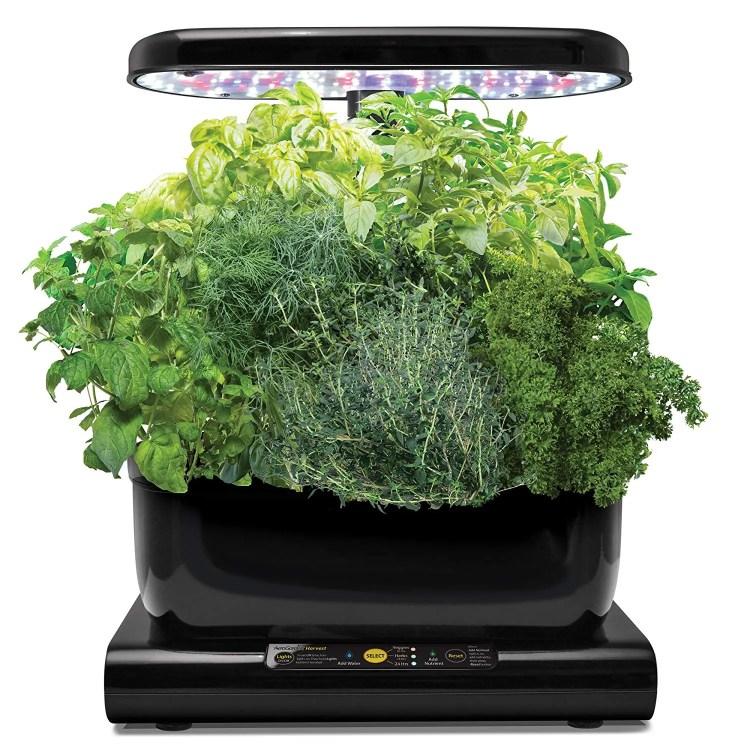 AeroGarden Harvest - Kit de cultivo interior hidropónico (varias plantas)