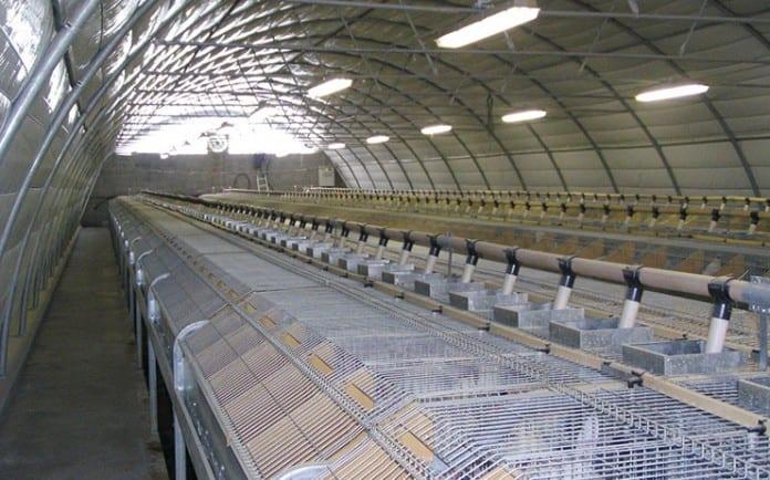 Solidaritet med spanska arbetare inom fjäderfä- och kaninkött