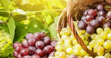 les raisins, les raisins et le cancer, les raisins bénéfiques pour la santé