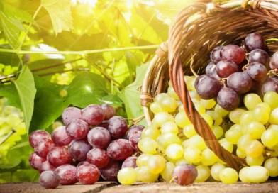 Les raisins renforcent l'immunité et luttent contre le cancer