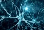 La création des neurones artificiels qui pourraient guérir la paralysie et d'autres troubles neurologiques