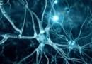 neurones artificiels, les neurones, comment rétablir les neurones