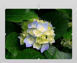 flower Crop to shape 1