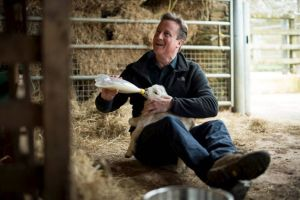 Look at what British Prime Minister is doing to this Lamb (Photo)