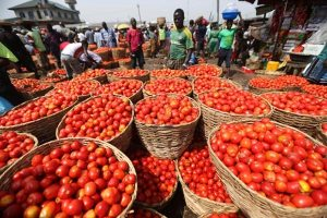 See This Village In Benue Where A Basket Of Tomatoes Goes For N150