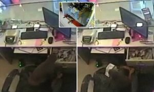 Monkey steals cash from jewellery shop in India, after tricking staff (Photo + Video)