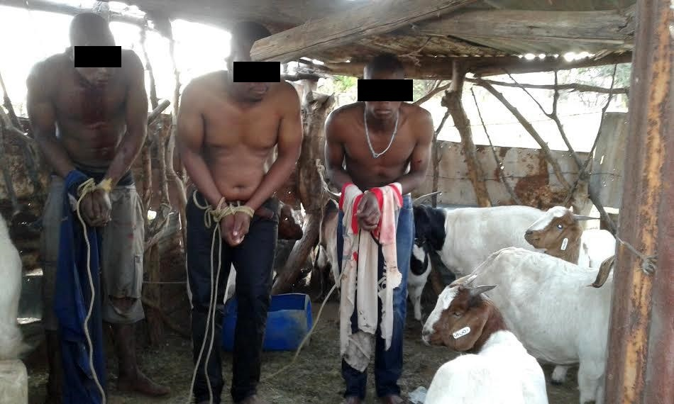 The alleged goat thieves