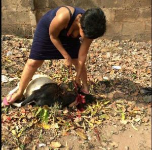 Pretty Nigerian Lady slaughters goat!