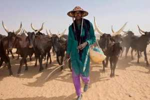 See The 16 States That Are Ready To Establish Cattle Colonies