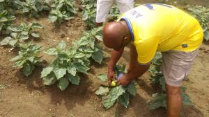 Agriculture is my MMM-Akwa Ibom based Journalist