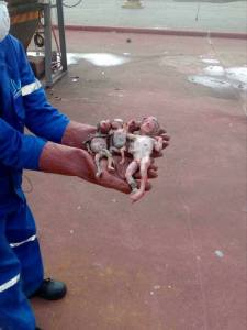 Man Finds Dead Triplets Dumped In A Dustbin By Mother (Graphic Photos)