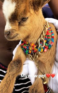 See Wizkid's New Pet; Asks For Name Suggestion (Photos)