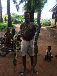 WOW: Check out this giant snake someone caught (Photo)