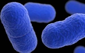 WHO warns Nigeria, 15 other African countries on listeriosis outbreak