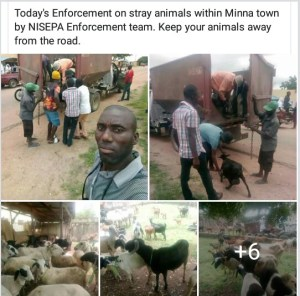 159 Stray Animals Arrested In Minna, By Niger State Government (Photos)