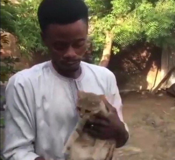 , See The Nigerian Man That Willed 20% Of His Wealth To His Cat (Photo), Effiezy - Top Nigerian News & Entertainment Website