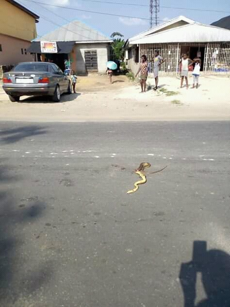 , Lady Blame Enemies Over Snake Attack In Her Shop (Photos), Effiezy - Top Nigerian News & Entertainment Website