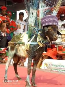 Goat Dressed With Brooms At Gov Wike's Campaign Rally In Port Harcourt (Photos)