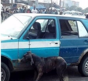 Man turns into a dog after alighting from his car, yesterday in Port Harcourt (Photos)