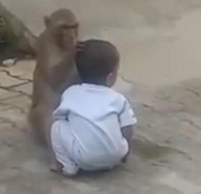 , Monkey kidnaps 2-year-old boy from his home so he could have someone to play with (Video), Effiezy - Top Nigerian News & Entertainment Website