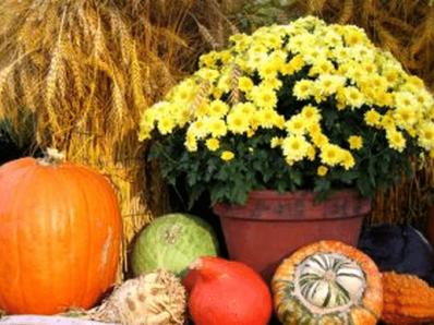 Marketing ideas for Thanksgiving