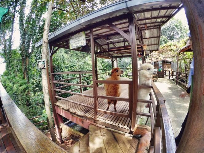 KL Tower Kuala Lumpur Malaysia Selangor Mini Zoo Raymond Ong Effye Anf Ho Koon Kiang Bella Phei Effye Media A04