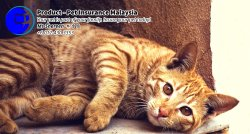 Pet Insurance Malaysia Johor Batu Pahat Agensi Pekerjaan Unilink Prospects SB Wisma V Cat Insurance Malaysia Dog Insurance Malaysia Johor Batu Pahat Your pet is part of your family Insure your pet today A01