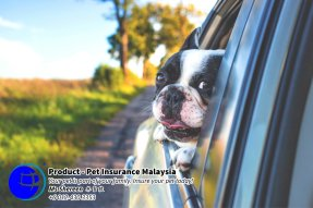 Pet Insurance Malaysia Johor Batu Pahat Agensi Pekerjaan Unilink Prospects SB Wisma V Cat Insurance Malaysia Dog Insurance Malaysia Johor Batu Pahat Your pet is part of your family Insure your pet today A19