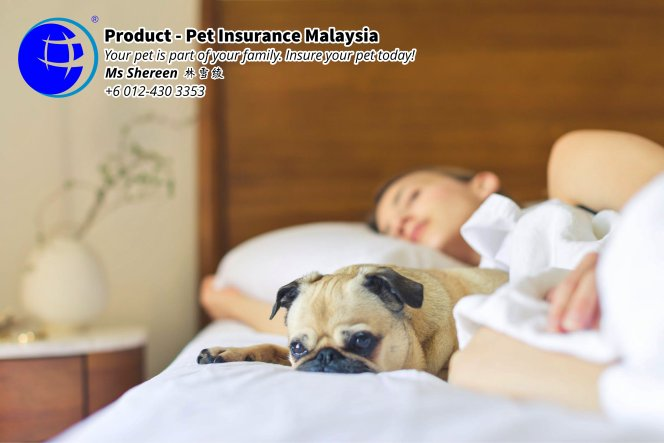 Pet Insurance Malaysia Johor Batu Pahat Agensi Pekerjaan Unilink Prospects SB Wisma V Cat Insurance Malaysia Dog Insurance Malaysia Johor Batu Pahat Your pet is part of your family Insure your pet today A14