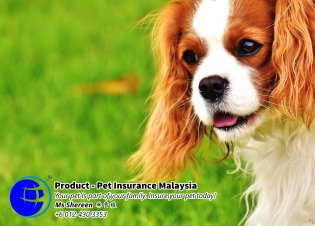 Pet Insurance Malaysia Johor Batu Pahat Agensi Pekerjaan Unilink Prospects SB Wisma V Cat Insurance Malaysia Dog Insurance Malaysia Johor Batu Pahat Your pet is part of your family Insure your pet today A04