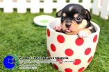 Pet Insurance Malaysia Johor Batu Pahat Agensi Pekerjaan Unilink Prospects SB Wisma V Cat Insurance Malaysia Dog Insurance Malaysia Johor Batu Pahat Your pet is part of your family Insure your pet today A05
