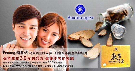 Penang 销售站 马来西亚红人参 红色东革阿里根部切片 Awana Apex 在马来西亚200多间大中药行均有出售 东革阿里 A01