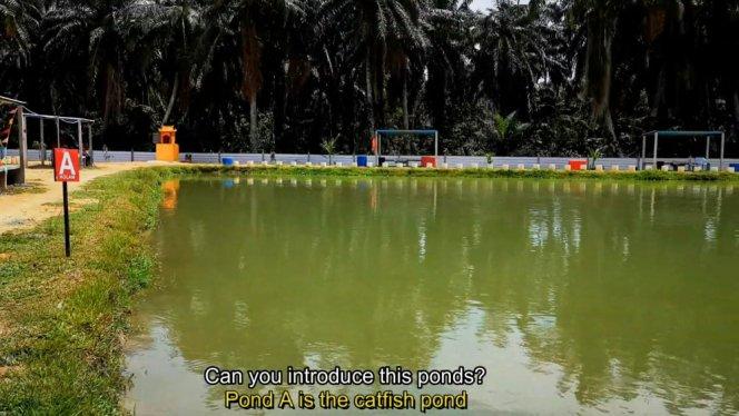 Kolam Memancing Simpang Sikon - Kolam Memancing Ikan Parit Raja Batu Pahat Johor Malaysia B07
