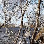 Alster im Frühling