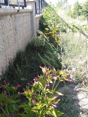 askıda tohum projesi - tohum bankası projesi, efgan, efkan, doğan