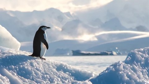 EF Hutton Signals Leadership in Sustainability as Sponsor of Antarctica 2021: Harnessing Art and Advocacy to Advance Ocean Conservation for Climate Week NYC | Current Events | EF Hutton