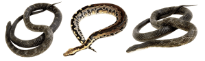 snake, terrarium, bastards