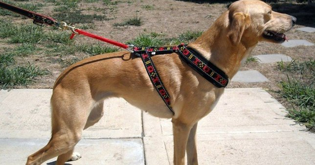choose-the-best-dog-harness-3