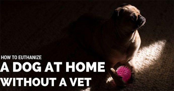 How To Euthanize A Dog At Home Without A Vet