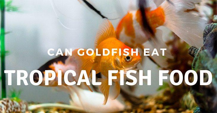 Can goldfish eat tropical fish food