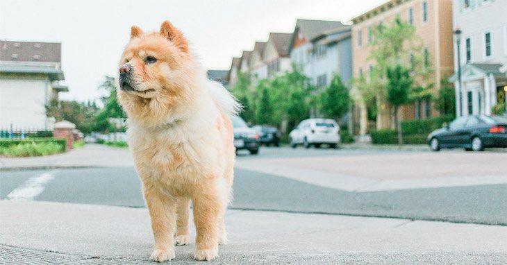 Best Diabetic Dog Food Brands