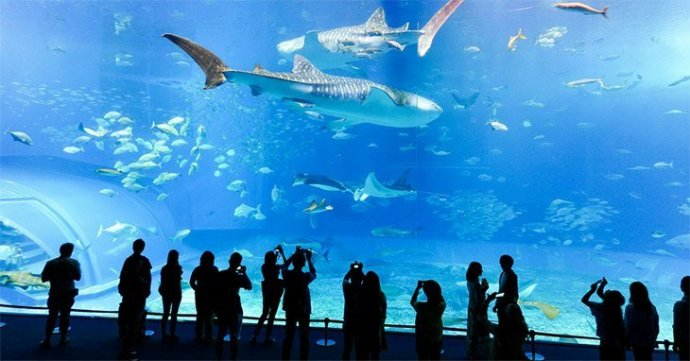 top 25 aquarium blogs2