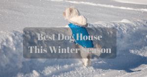 Best Dog House This Winter Season