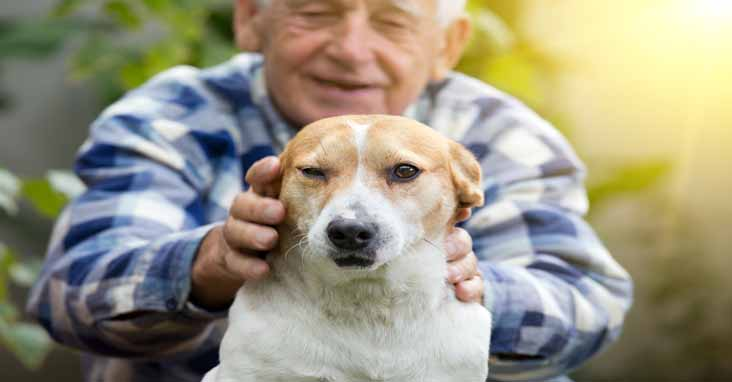service dogs for dementia patients