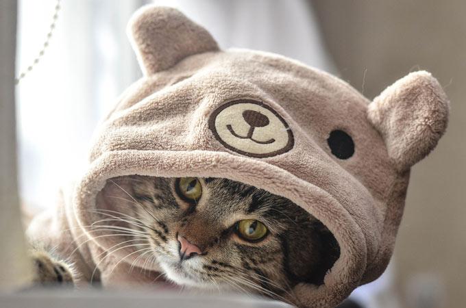 cat clothes adorable