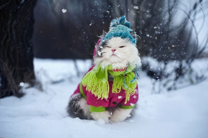 cat clothes thermal protection